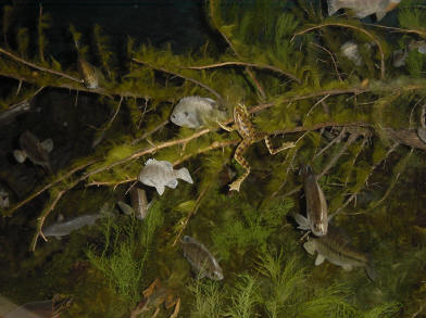 View in the underwater diorama
