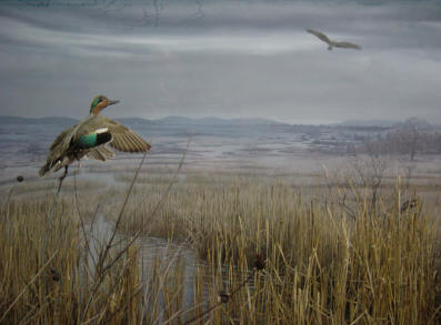 View in the wetlands/uplands diorama